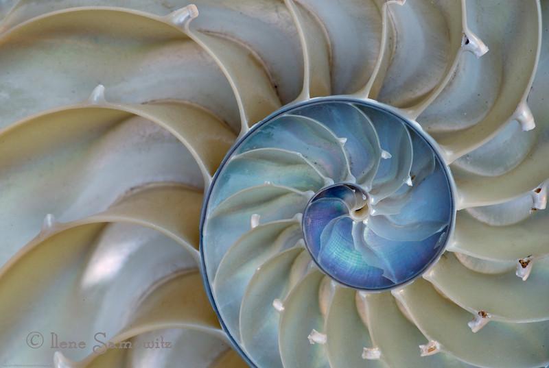 10-31-13 Nautilus