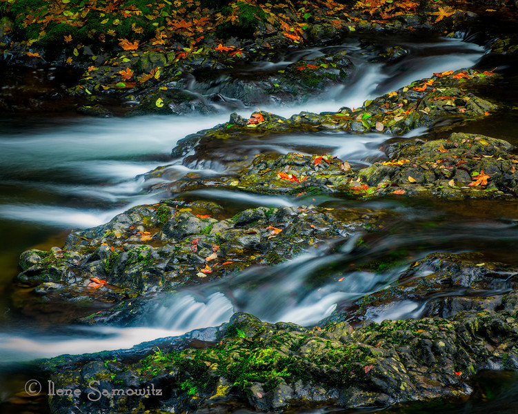11-6-13 Fall leaves at the upper north falls at Silver Falls State Park, Oregon. I took this during my photo workshop to Bend and Salem, Oregon.<br /> <br /> Life has been hectic. When I came back from my trip, work was crazy. Last night was our final release of the year since we only have a small patch release next week before we head into holiday freeze. Things were so hectic that I didn't unpack my photo laptop until Saturday. All i did was work, came home watched netflix, and went to sleep. I work for Walgreens and my team is responsible for testing drugstore.com and beauty.com.   Thanks to all of you for being forgiving and to continue to comment on my images. I hope to get back in full swing.
