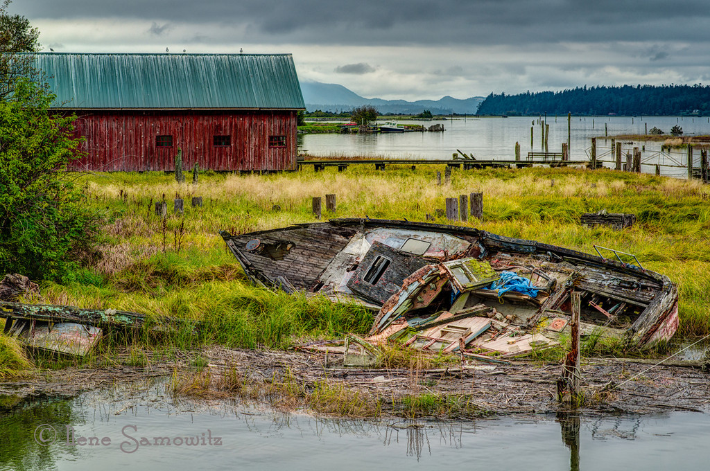 9-15-13 Decaying Skiff Along the Samish River in Skagit County, WA<br /> <br /> Thanks for making my J is for Junker number 1.  I truly enjoyed seeing all the J images.  Snugs  rock.