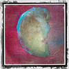This is a C formed from a seashell. I used quick mask and created a new layer from selecting the shell.  I removed the original background and used a texture for the background.  I then used a second texture to give the shell (C) some more definition.  Then I brought the image I to Perfect Effects and added a frame and a texture throughout.