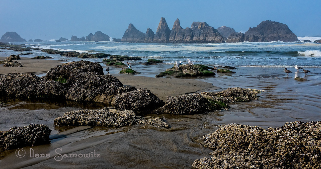 Seal Rock Morning