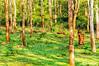 Nagarhole Forest