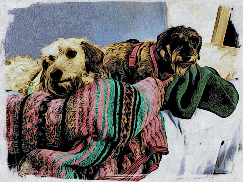 Traveling In Comfort - my mini dachshunds relaxing in the RV