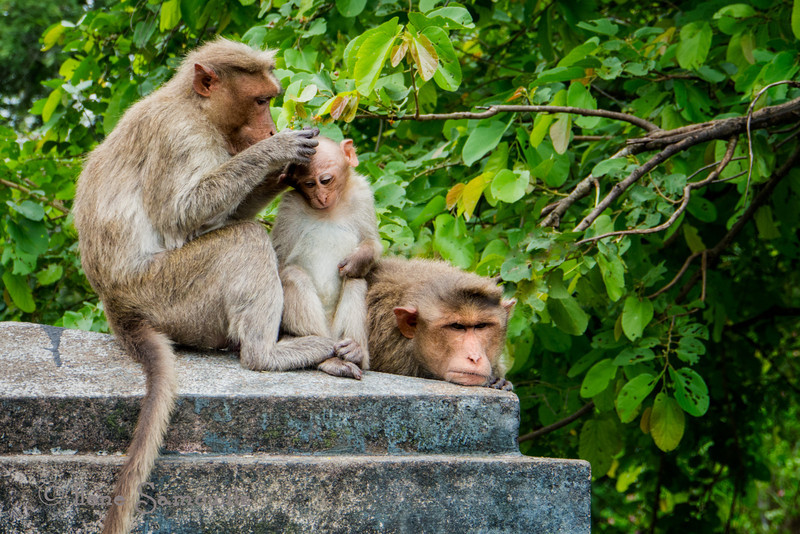 A happy family in Bandipur