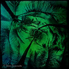 Kauai Palms<br /> <br /> IR photo processed with iPad using Tiny Planet, PS Touch, textures, and Camera Awesome.