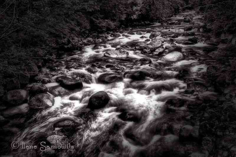 Sunshine Coast stream.