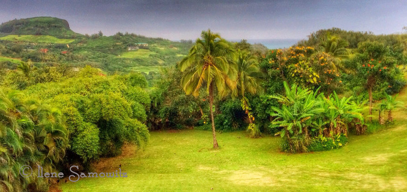 This is the view from the deck of the house we rented in Kilauea, Kauai.