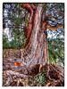 A tree at Ke'ke Beach, Kauai