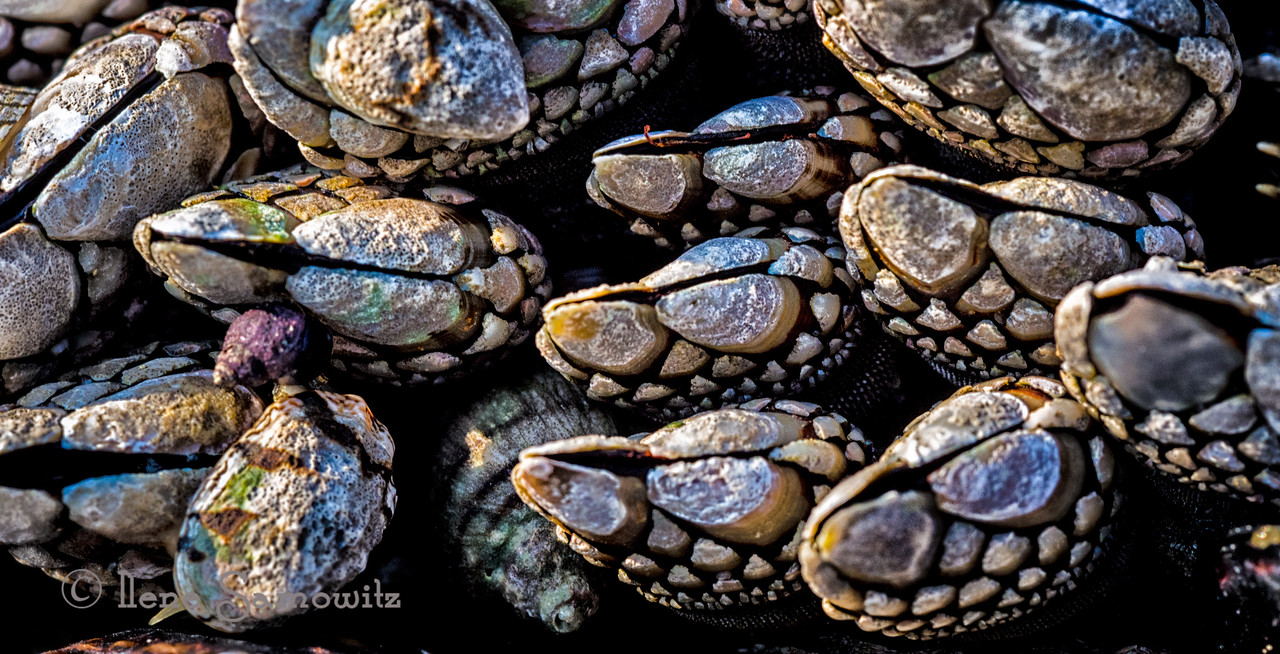 Barnacle patterns and colors