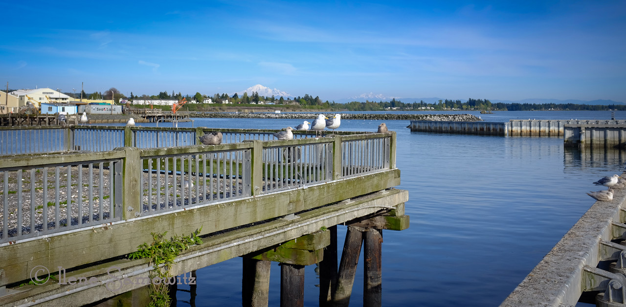 Blaine, WA fishing Pier with Mount Baker in the background.