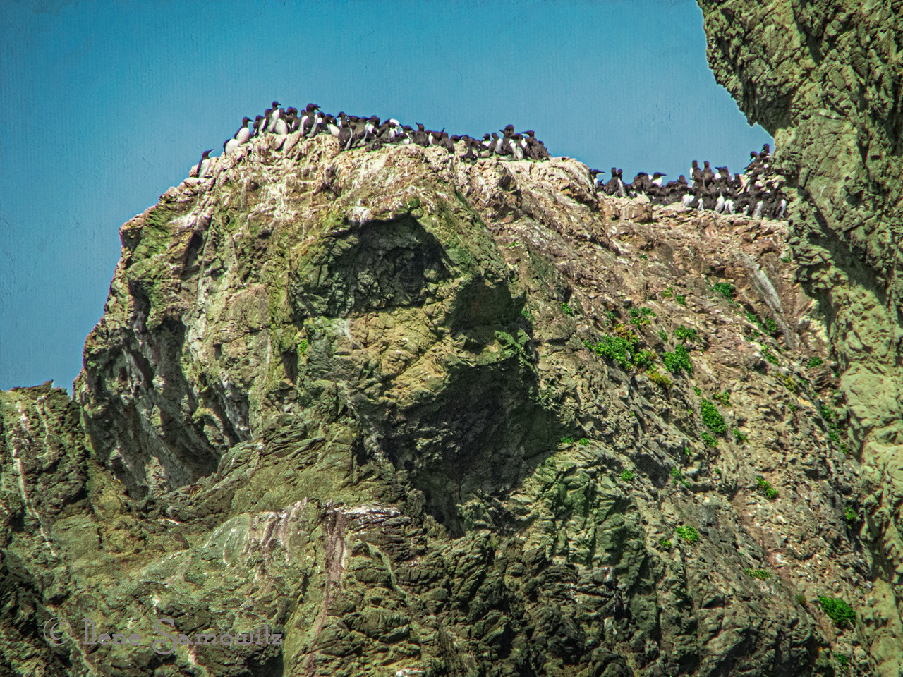 Colony of Common Murres at Elephant Rock in Bandon.  I added some texture to the sky to add some interest.