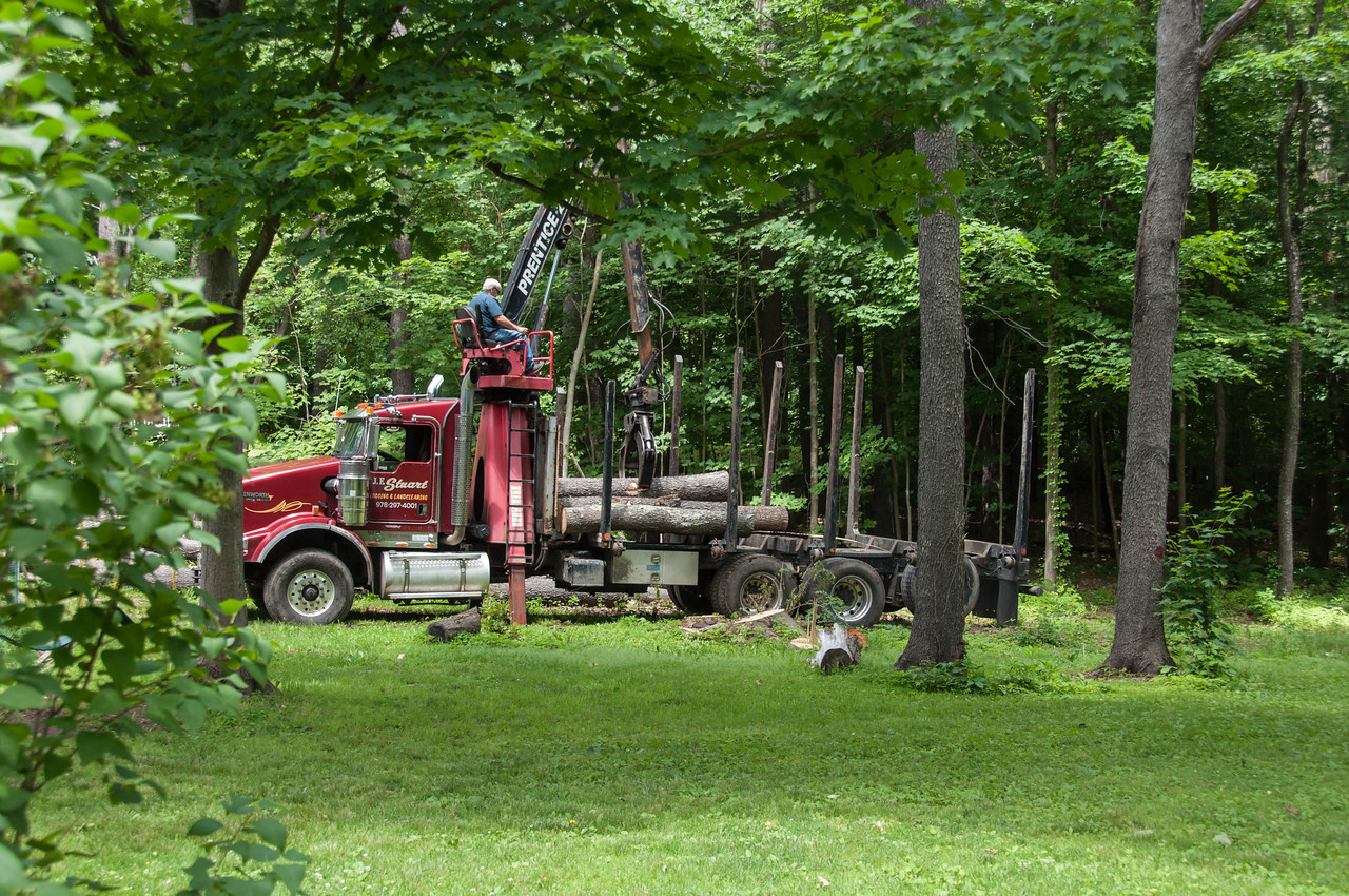 Load of cherry logs leaving our back yard.