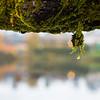mossy drop