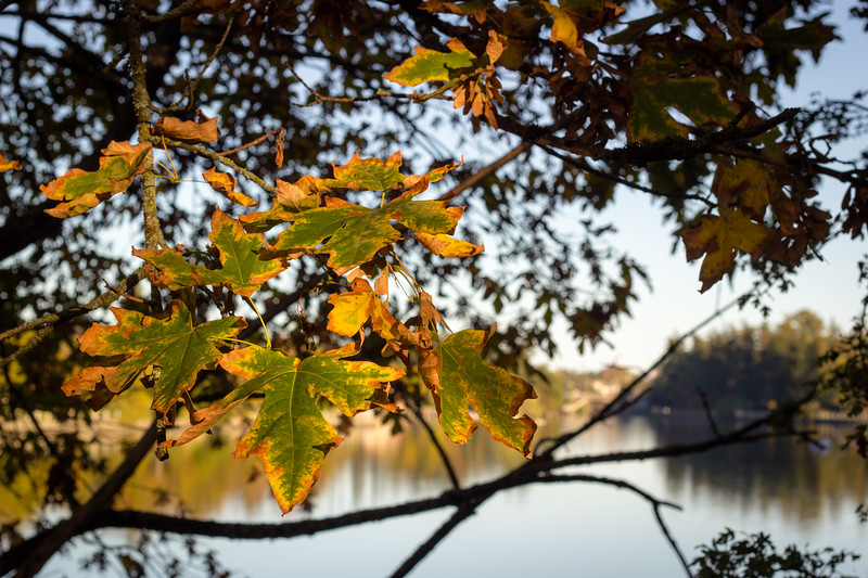 leaves on the gorge