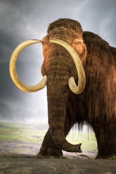 mammothy