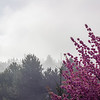 cherry blossoms in the fog (hdr)