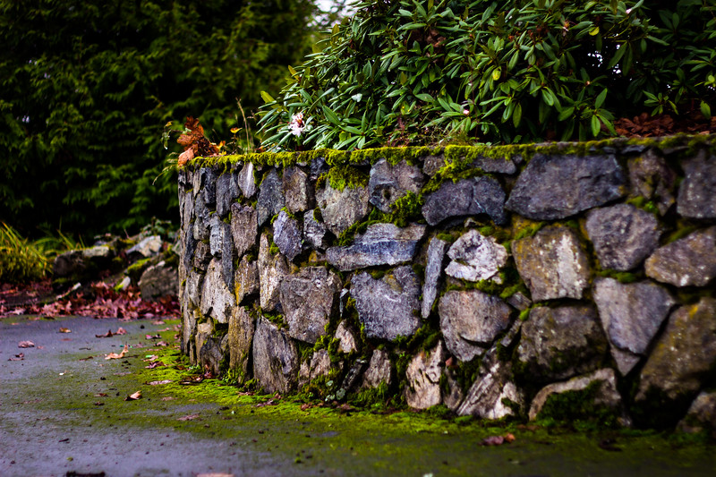 rock wall with moss