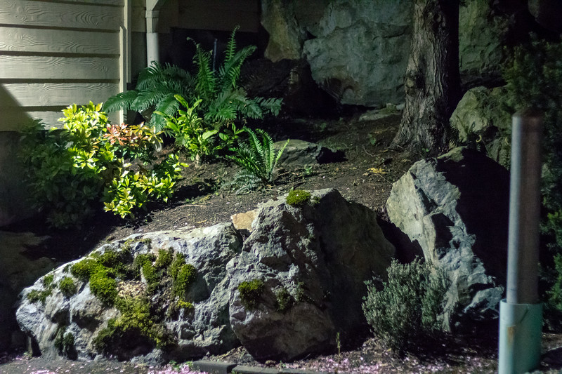 landscaping at night