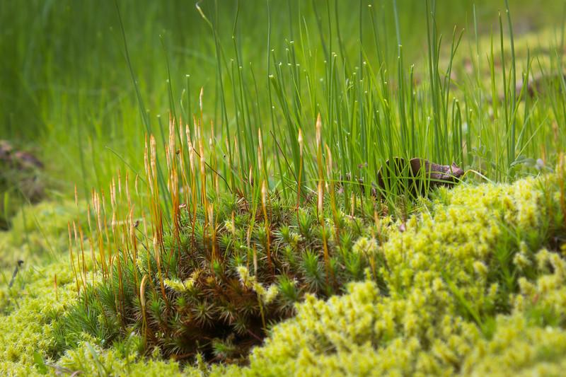backyard moss