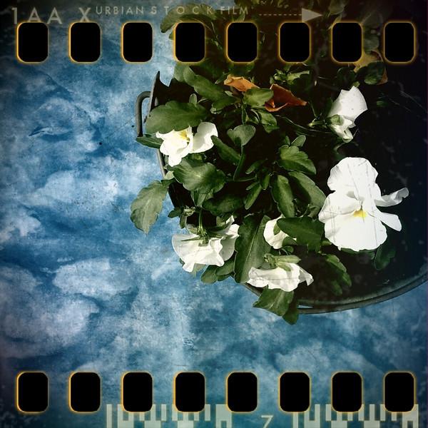April 6th I: Flower pot