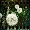 April 24th: Dandelion