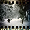 December 27th I: Sledging in the woods