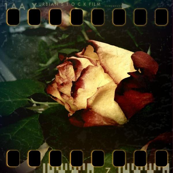 December 28th I: Rose