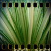 February 18th: Jungle (homegrown)
