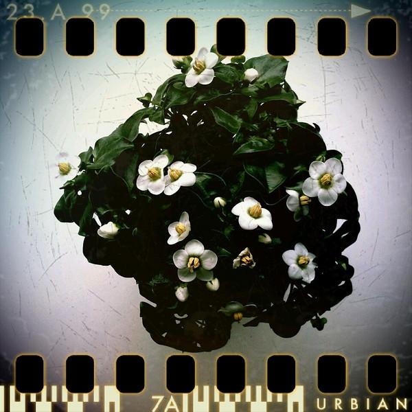 February 4th: Little flower planet