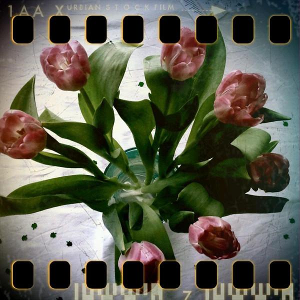February 27th: Tulips