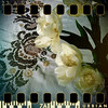 February 12th I: Textile and real flowers