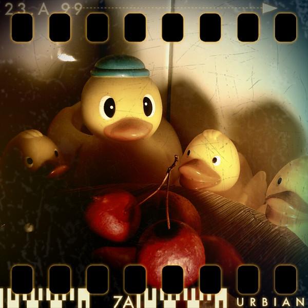 January 8th: Cherry-hunting ducks (at night)