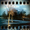 January 4th I: Illuminated trees