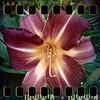July 11th: Flower