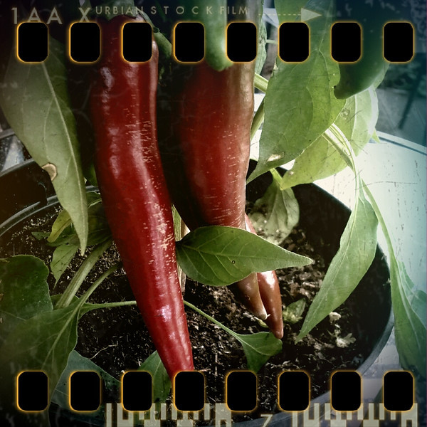 July 25th: Red pepper