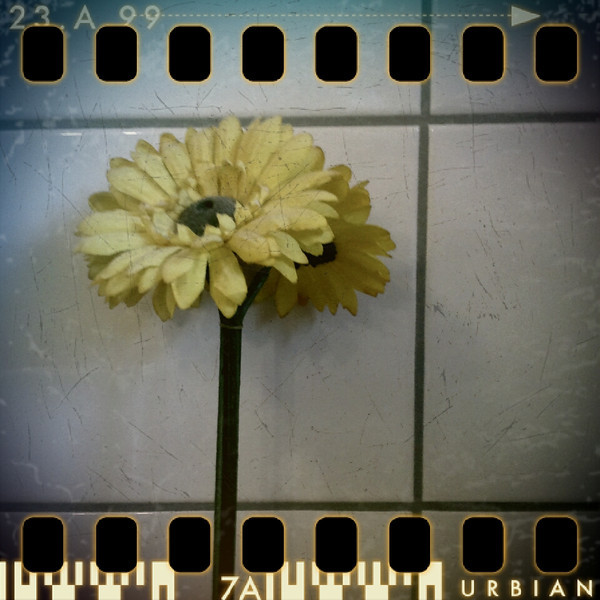 July 27th: Artificial bathroom flower
