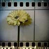 July 27th: Artificial bathroom flower