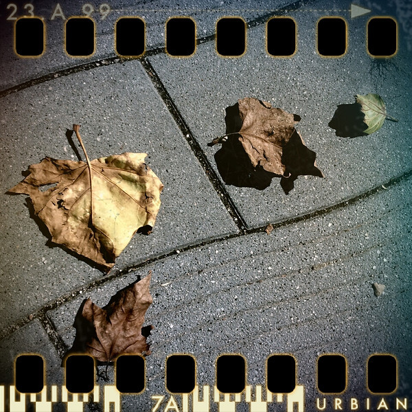 July 22nd: Autumn leaves in summer?