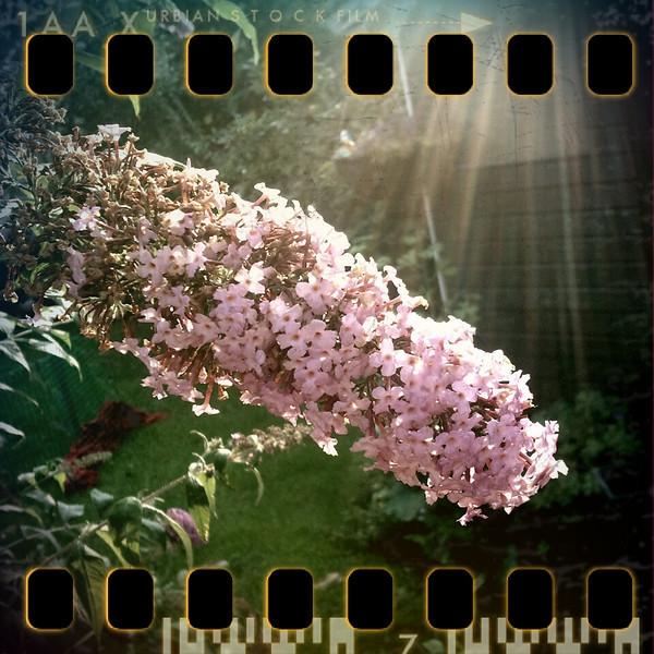July 21st: Full bloom