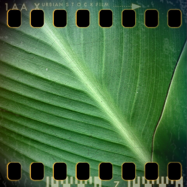 July 10th I: Leaf