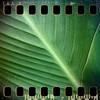 July 10th I: Leaf