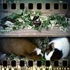 June 2nd: Salad fight