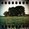 June 12th II: Potato field