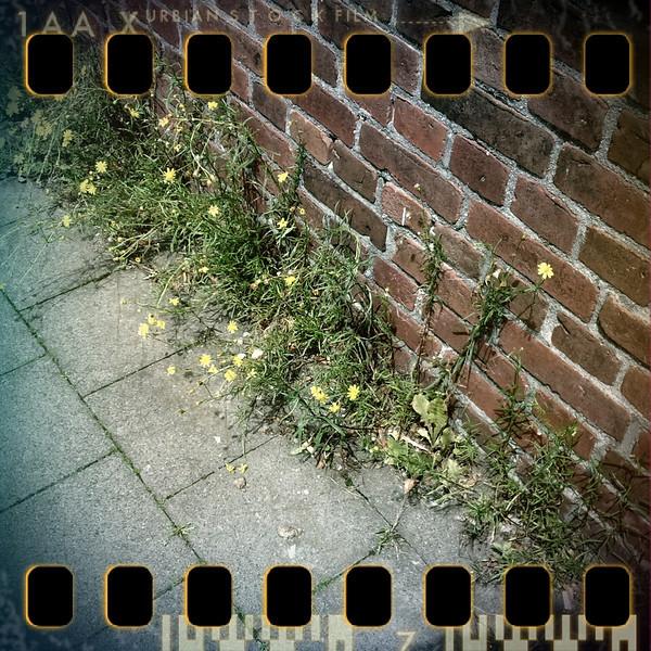 June 23rd: Wall flowers