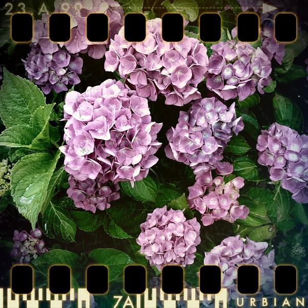 June 18th II: Full bloom II