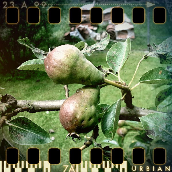 June 24th I: Pears