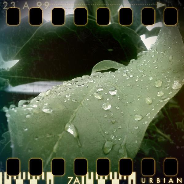 June 30th: Rain on leaf