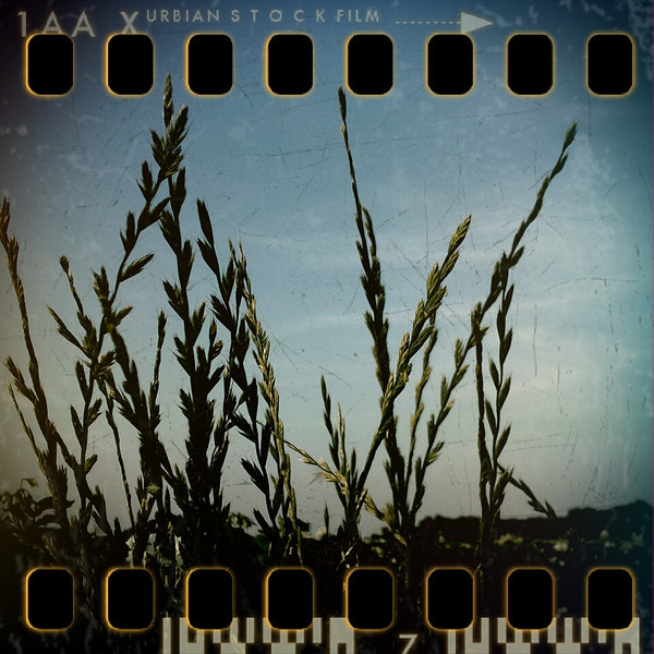 June 7th I: Evening grass
