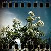 May 23rd: Sky roses