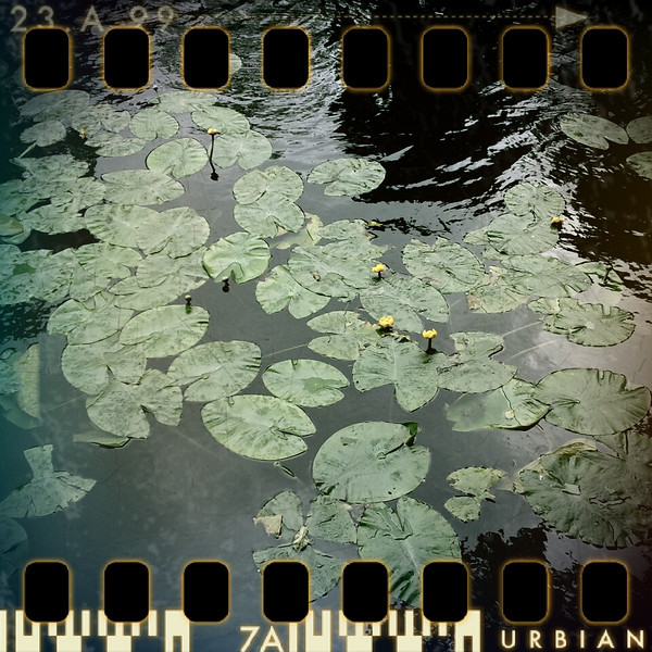 May 17th I: Water lilies